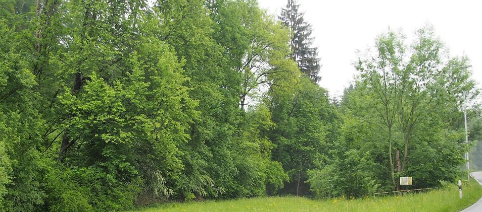 Waldwiese und Weiher in der Ribi