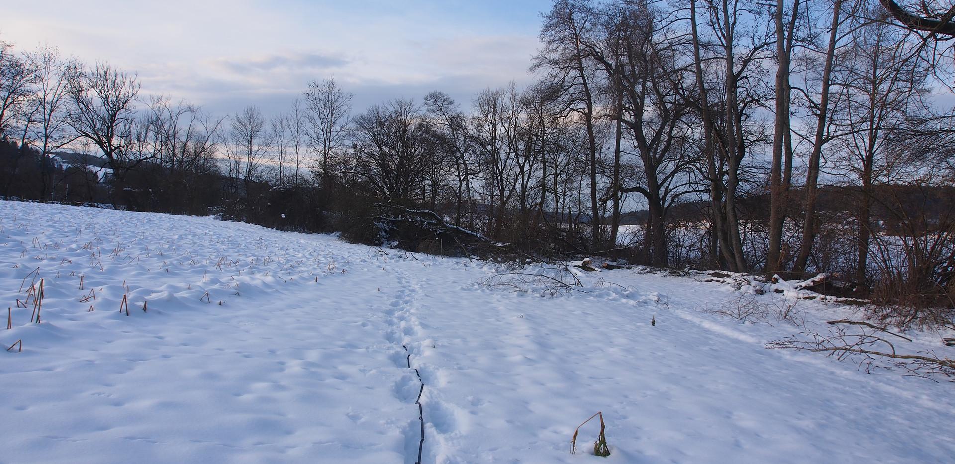 Blick Richtung Grube Mättenfeld