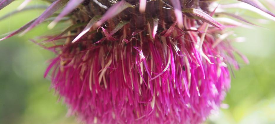 Blumenmeer im Sommer 19