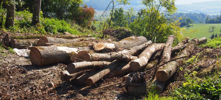 Altholz für Kleinstrukturen
