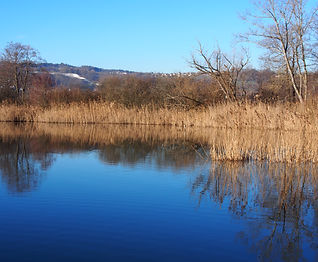 EarlybirdHallwilersee (15).JPG