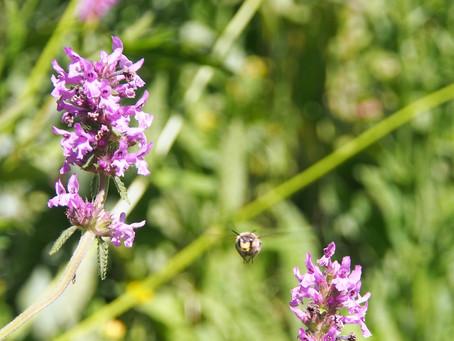 Wettbewerb: Biene des Monats