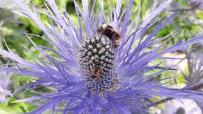 Biene des Monats: Gewinner 2020 stehen fest