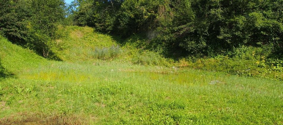 temporäre Gewässer und Ruderalpflanzen
