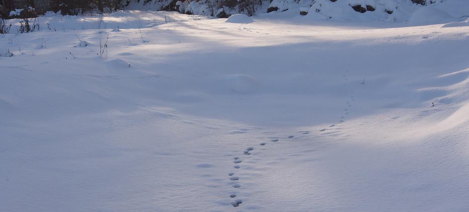 Januar 21: Spuren im Schnee