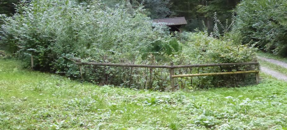 Waldweiher mit Waldwiese
