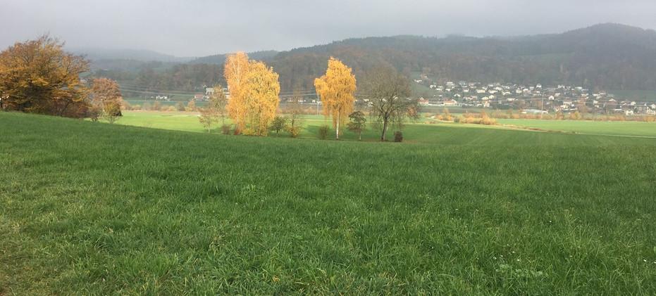 Herbst im Moos