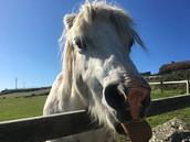 Cheeky_Horse_0718.jpeg