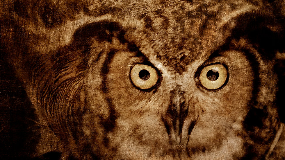 """Owl"" 12"" x 12"" signed print on art paper"
