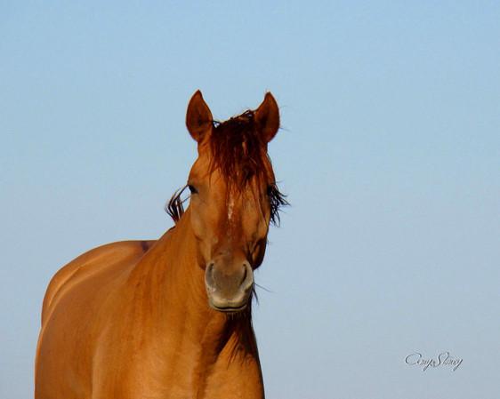 why we love horses.jpg