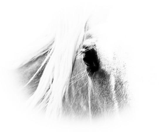 soul of a horse BW.jpg
