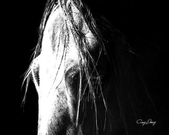 the inner horse BW.jpg