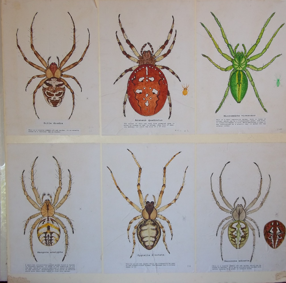 6 spiders