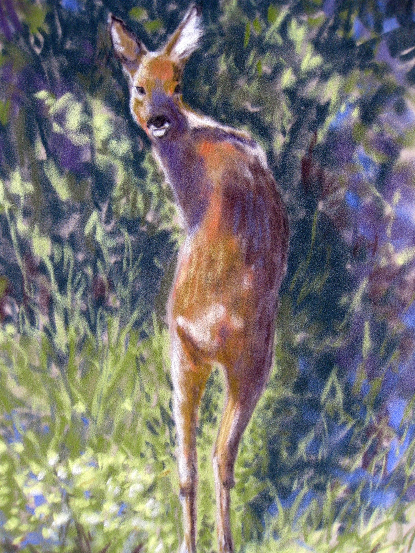 Young Deer, pastel
