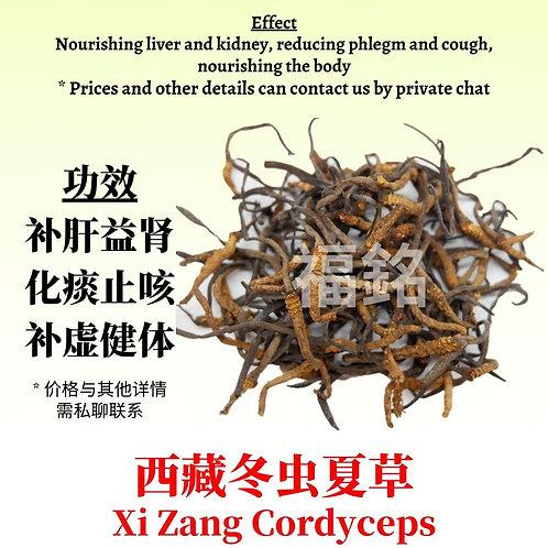 Xi Zang Cordyceps