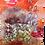 Thumbnail: Xue Li Yang Wei Bu Pi Si Shen Herbal Soup (120G / PKT)