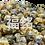 Thumbnail: Premium Tire Chrysanthemum (AA) (100G/PKT)