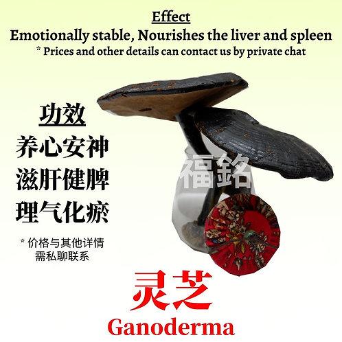 Ganoderma