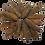Thumbnail: Featured Australia Sea Cucumber (100G)