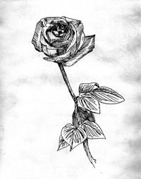 RoseDrawing.jpg