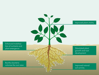 RHIZOVITAL REGISTRATION APPROVED IN CANADA