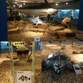 Museu Oceanográfico.