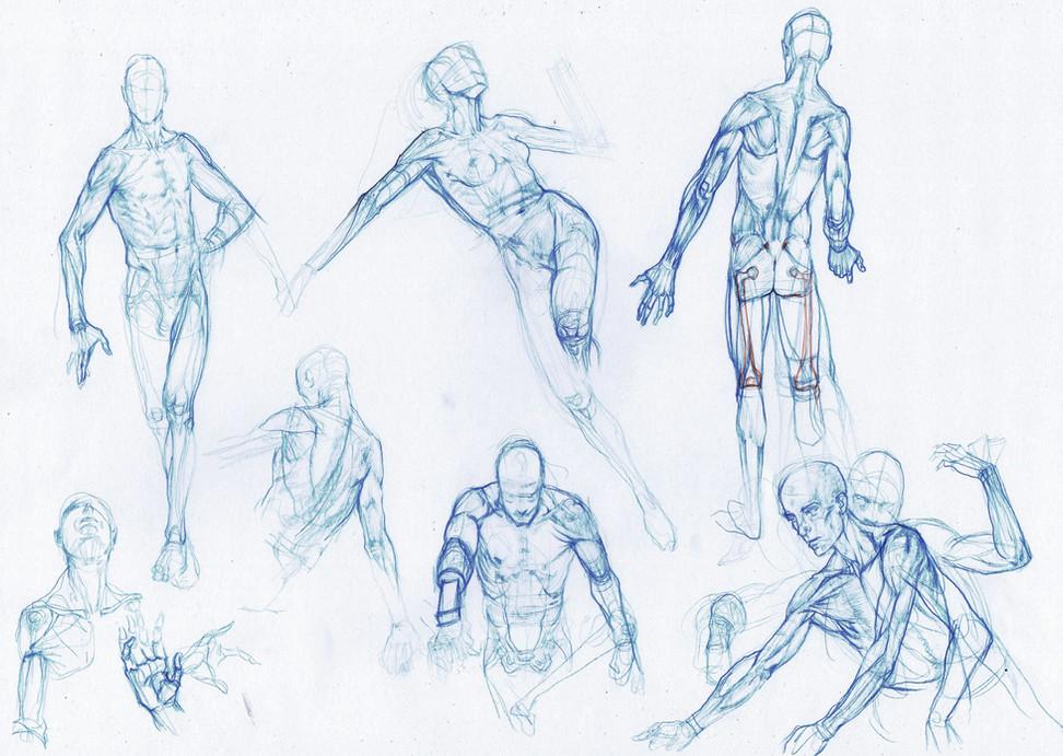 anatomy2.jpg