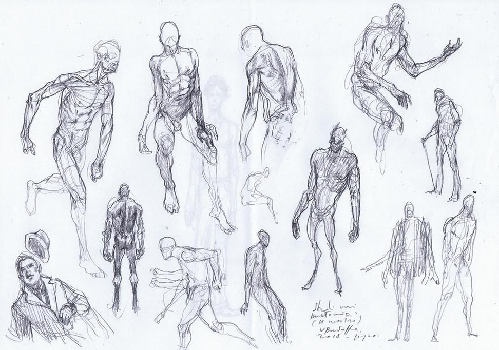 studi anatomia 2018 1.jpg