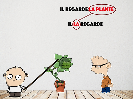 plante.png