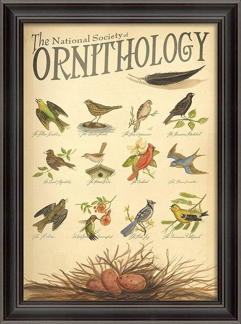 LS Ornithology