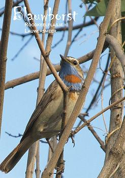 Lauwersmeer-vogels-staand-NCR-8.jpg