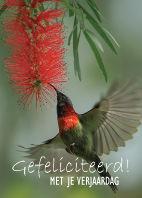 Bloemenkaartjes-Gefeliciteerd-Vogel-vlie