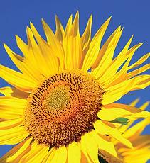 Fleur-229.jpg