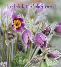 Fleur-261-G.jpg