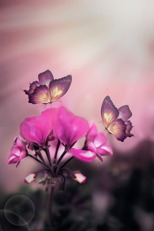 Pink is Joy