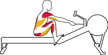 A Biomechanical Analysis of Rowing