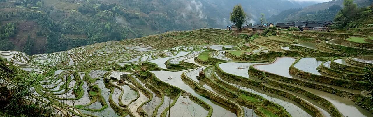 טרסו אורז במחוז גוויז'וא