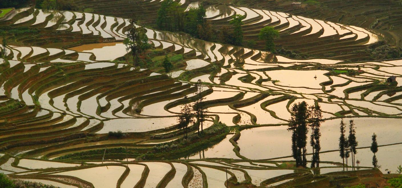 טרסות האורז של יואן-יאנג, יונאן