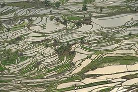 טרסות האורז של יואן- יאנג, יונאן צילום: יובל לוי