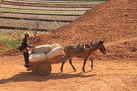 יונאן החקלאית- צילום: יובל לוי