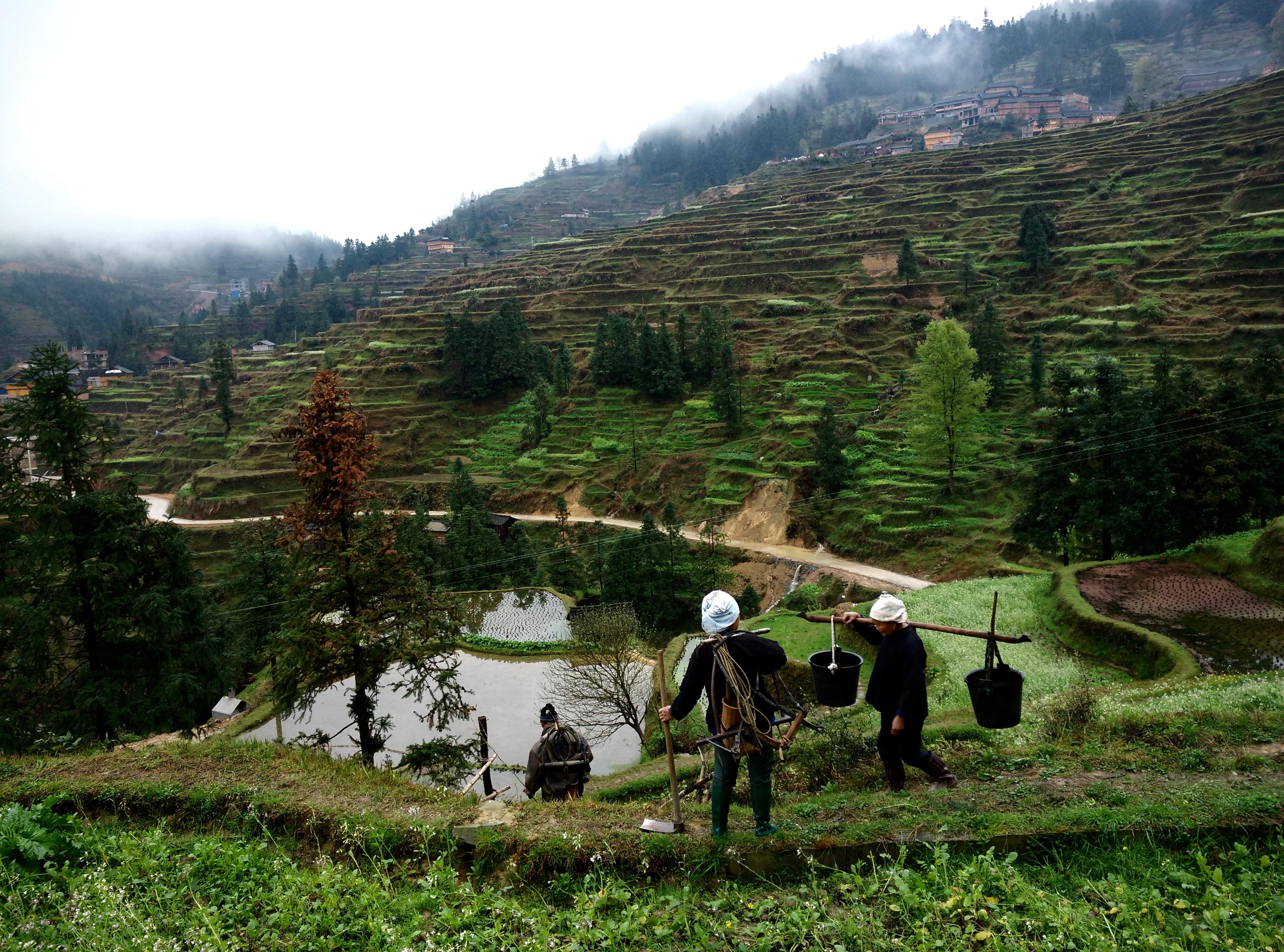 איכרים בשדות האורז