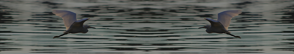 CooindaDowns_SliceBackground_Waterbirds.
