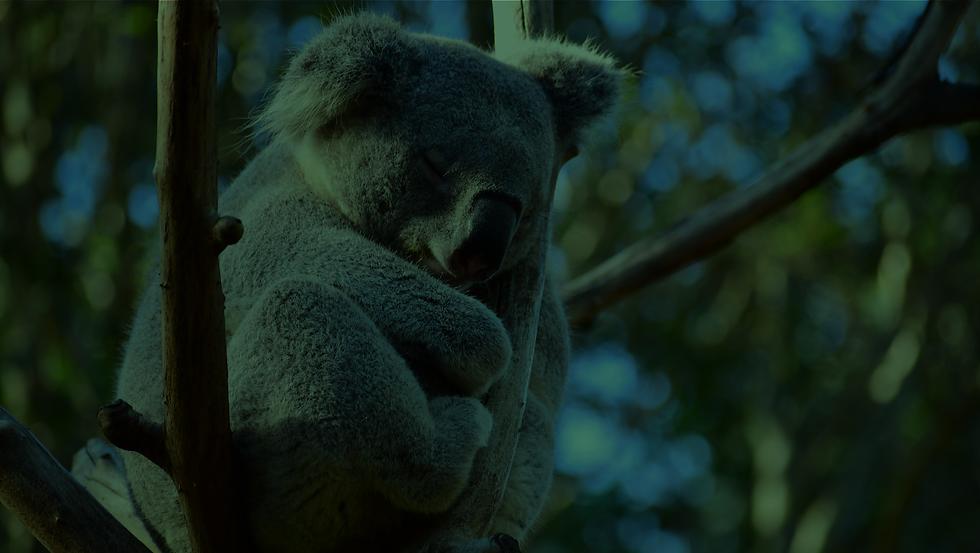 CooindaDowns_SliceBackground_KoalaGreen.