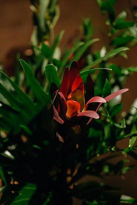 Wishbone_Soho-83.jpg