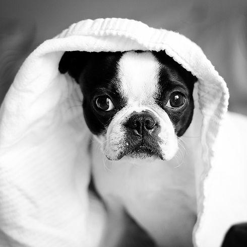 chien consultations clinique veterinaire Lafrançaise Tarn et Garonne