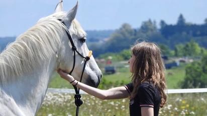 cheval activité equine