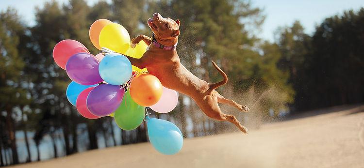 cap douleur physiotherapie chien clinique veterinaire sud quercy