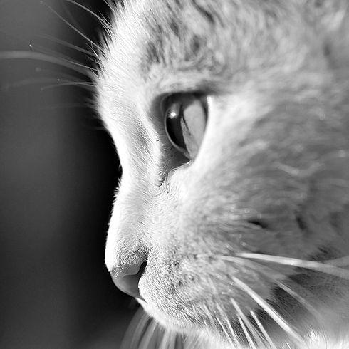 chat conseils soins clinique veterinaire Lafrançaise Tarn et Garonne