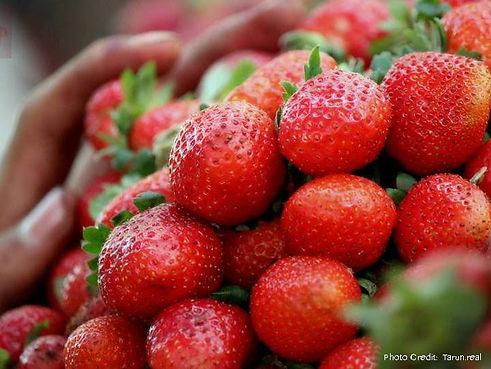 Strawberries_for_sale_at_Mahabaleshwar+a