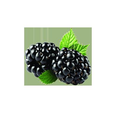 blackberry_PNG10